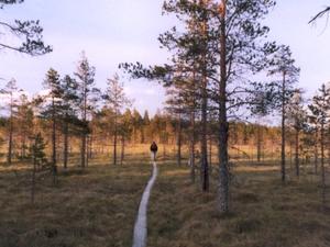 Salamajärvi Parque Nacional