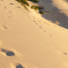 Cronulla dunas de arena