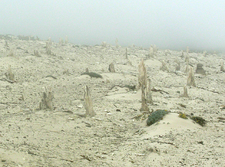 San Miguel Island Caliche