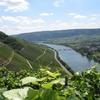 Typical Landscape Of Mosel Vineyards Near Schweich