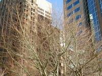Seattle Torre