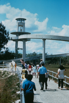Shark Valley Trail And Observation Tower