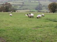 Hatterrall Hill