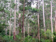 Sheldon Forest Australia