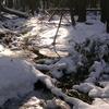 Sheldrick Forest Stream