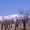 Pico Del Caballo