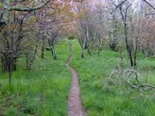 The Appalachian Trail Crossing Spence Field