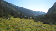 Spider Meadow