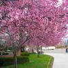 Spring Blossom Broncos Stadium