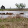 Goose Lake Priarie Morris