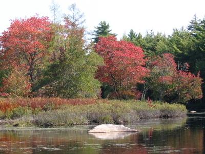 Still  Brook In  Fall