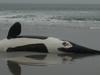 Whale On A Beach