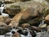 Stream Of Uluguru  Mountains