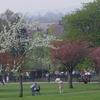 Sunny Hill Park