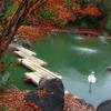 Swan At The Gardens Autumn Lake