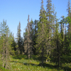 Syote National Park