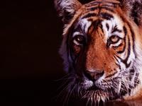 Ranthambore Tiger Reserve - Winter Bonanza !! WOW Rates...