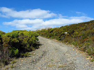 Table Mountain Bike Tour From Cape Town Photos