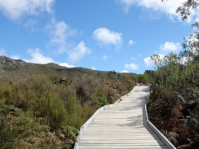Table Mountain National Park SA Pathway