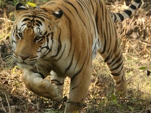 Jungle Safari Trip Fotos