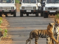 Tadoba, Home of Tiger's