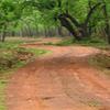 Tadoba National Park Trek