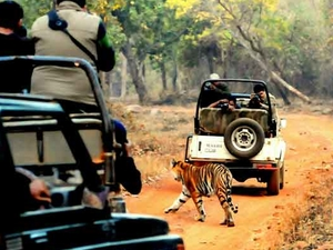 Tadoba Safari Package Photos