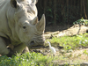 Taipei Zoo  Rhino