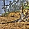 @ Tajpur Beach WB