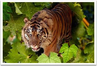 Taman Safari Park Bogor
