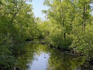 Tamarack Río