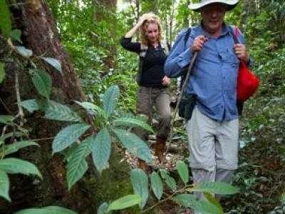 Tambunan - Forest Area