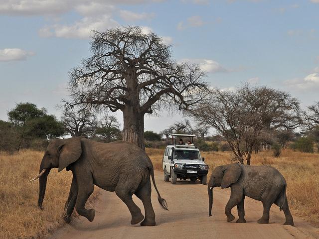 Walking And Wildlife Safari Photos