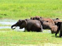 Northern Circuit Safari - Tanzania