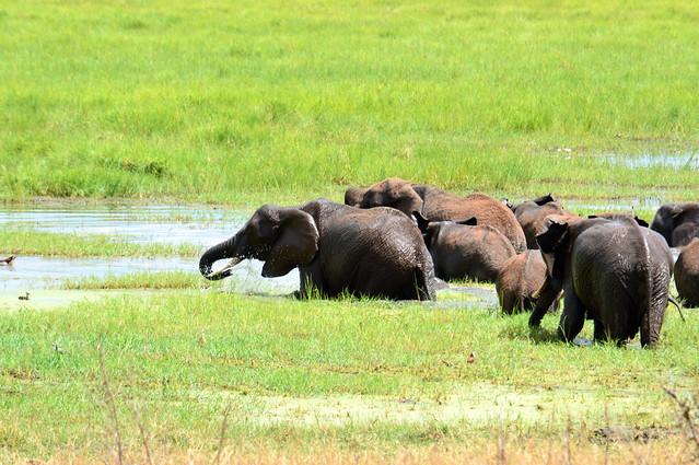 Northern Circuit Safari - Tanzania Photos