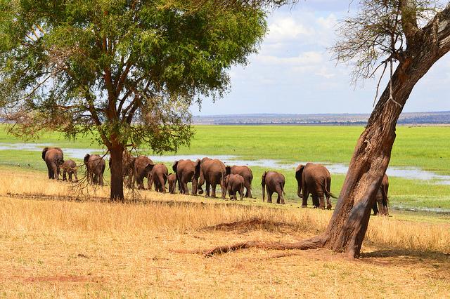 7 Days Safaris Tanzania Photos