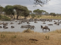 6 Days Tanzania Wildlife Camping Safari
