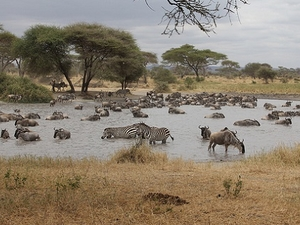 6 Days Tanzania Wildlife Camping Safari Fotos