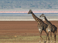 Tanzania Budget Camping 3 Days Safari