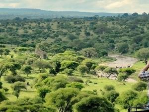 4 Days Tanzania Safari Photos