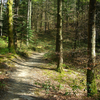 Tataweka Hut to Tawa Hut Trail