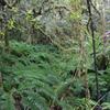 Tawarau Forest Hunting Area - North Island - New Zealand