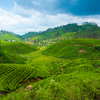 Kerala Honeymoon Luxury Package