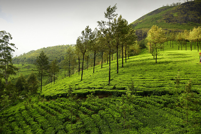 Nature Adventure Romantic Kerala Trip Photos
