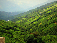 Gangtok - Darjeeling 5 Days