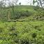 Sylhet División