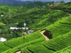 Sri Lanka Family Tour Package