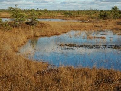 Teici Nature Reserve