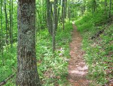 Telephone Trail 192 - Tonto National Forest - Arizona - USA
