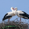 Telineelapuram and Telukunchi Bird Sanctuaries